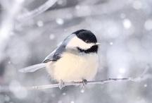 Birds / by Carolina Bryant