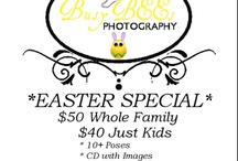 Busy BEEs Photography