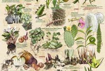rośliny tablice