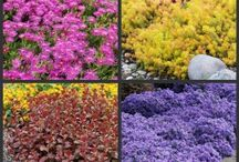 Ground Cover Plants / by Great Garden Plants
