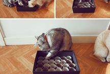 Kissalle tekemistä