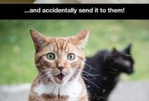 Cute and Hilarious Cats
