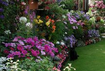Flowering Borders & Gardens / Flowers to plant in borders