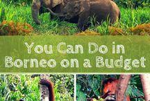 Borneo Travel Inspiration / Inspiration for your Borneo trip