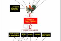 Poultry Pathology & Pathologic Anatomy