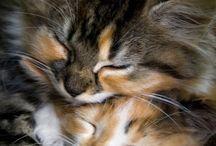kittens & Cats'