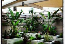 Garden / Garden-Gardenart-Pest control-Greece--Korinthos-Corinthos