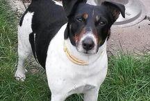 #Poldi #Lieblingshund #süß #Hund