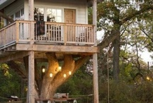 tree houses / by Pat Kendall