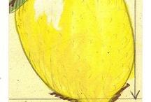 Lemon . Sorbet