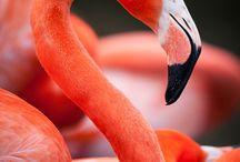 BIRD BOX / Birds are fascinating