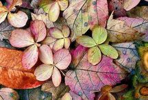 Természet színei