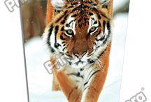 Libreta Vertical Animal Planet / Línea Escolar Primavera Regresa a Clases con TODO