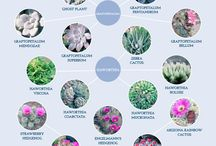 world types plants