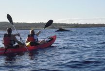 Maui Kayak Tour Customer Pictures