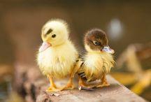 Adorable creatures