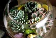 Terrarium / Miniture gardens