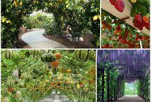 trädgård odla inspiration idéer