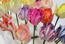 Cukrové Kvety