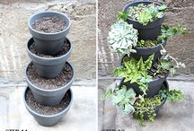 Garden / Plants