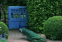 Peacocks / by Susie Miller