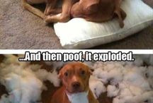 Funny pet pictures / Funny pictures of pets; funny pictures of dogs; funny pictures of cats