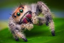 Spiders &c / mostly spiders, but also other creepy crawlies I think are beautiful