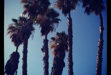 Palm trees / by Valerie Langarica