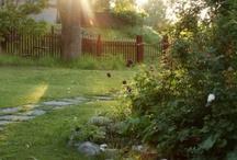 Drömträdgård