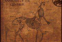 Sexy Centaurs