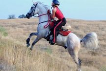 endurance horse tack / hacking is really fun!! this is some tack