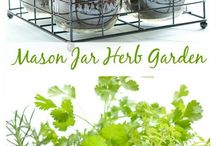 kitchen herb garden.