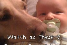 Kutyusok és állatok akiket nagyon szeretünk.