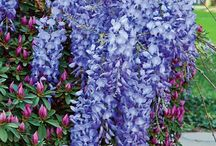 @flowers I would.like for the yard / by Jeanine Masten