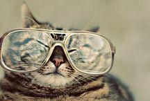Animals in Specs
