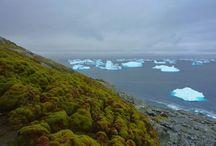 Antartica ocean sommer