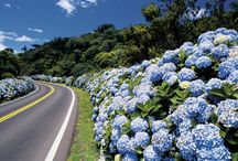 Gramado / Veja imagens da bela cidade de Gramado!