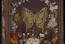 バタフライ  蝶