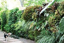 Outdoor Vertical Garden Ideas