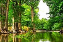 Forests/Woude