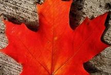Canadaness