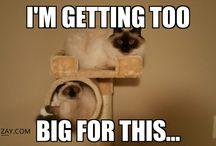 Funny Cat Memes / Funny and cute cat memes
