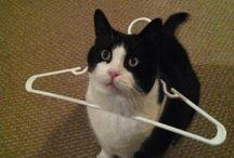 Cat Memes & Humor