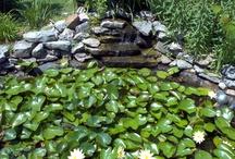 ponds / by Karrie Burks