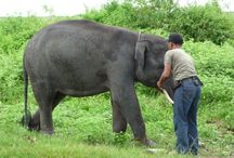 Sumatra Tour / Plan your travel with Us !!information and advice for a fun and safe trip we will give thank you for your time to have visit http://jarirentcar.com/tour-package.html info@jarirentcar.com