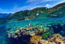 Vacation Gold Coast