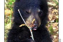 Wildlife in NH / Wildlife in NH