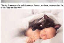 babys and animals