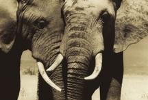 elephants are my favorite