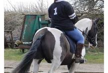 Fuller Fillies Family Album / Fuller Fillies is the leading manufacturer and distributor of exclusive equestrian apparel in the UK for plus size and full figured riders. Find our product at https://www.fuller-fillies.co.uk/